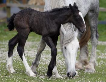 Рождённые в году Лошади: звёзды напутствуют. Фото: Matt Cardy/Getty Images
