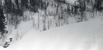 Место гибели четырёх туристов из группы Дятлова. Фото: nashural.ru