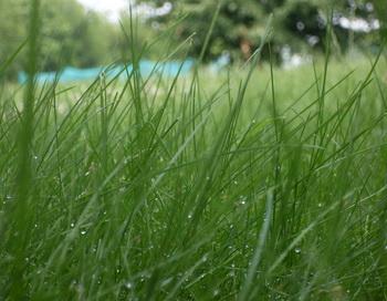 Утопая  по  щиколотки  в сочной, росистой траве... Фото: Екатерина Кравцова/Великая Эпоха