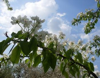 Весна. Фото: Екатерина Кравцова/Великая Эпоха