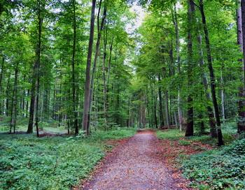 «Ты, лес, посочувствуй…» Фото: Николай Богатырев
