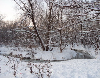 Зимний пейзаж. Фото: Николай Богатырёв