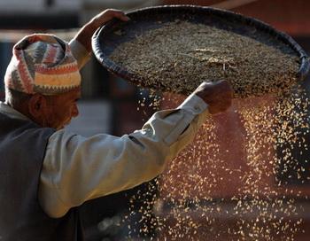 И давали те земли по два урожая в год, и жил в достатке тот сеятель и семья его. Фото: PRAKASH MATHEMA/AFP/Getty Images