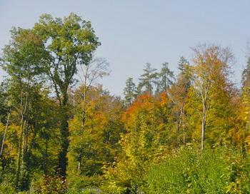 Осенний лес. Фото: Екатерина Кравцова/Великая Эпоха