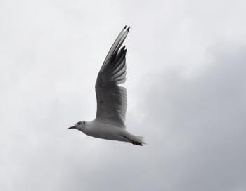Чайка. Фото: Николай Богатырев