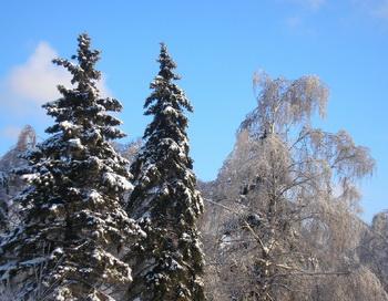 Зима. Фото: Ирина Митюшина