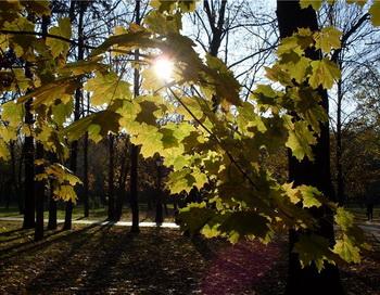 Солнечный луч пробился сквозь свободное пространство. Фото: Николай Богатырёв