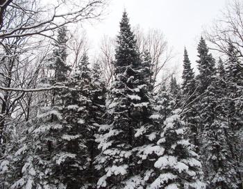 Зимний лес. Фото: Екатерина Кравцова/Великая Эпоха
