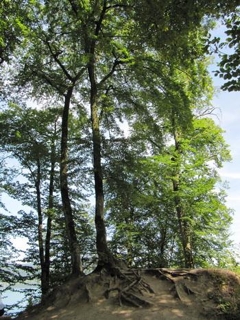 Дерево. Фото: Екатерина Кравцова/Великая Эпоха