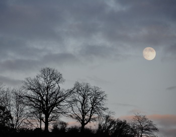 Луна. Фото: Николай Богатырев