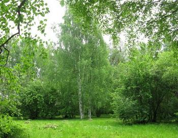 Лики леса. Фото: Валентина Филиппова