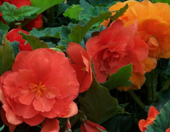 В один из теплых летних дней, когда природа вокруг играет красками. Фото: Екатерина Кравцова/Великая Эпоха