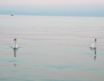Лебеди и озеро. Фото: Екатерина Кравцова/Великая Эпоха
