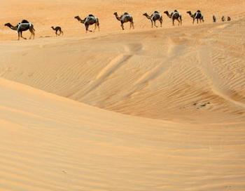 Путь через пустыню. Фото: KARIM SAHIB/AFP/Getty Images