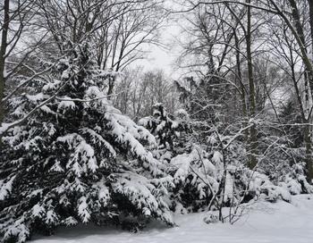 Зима. Фото: Николай Богатырев