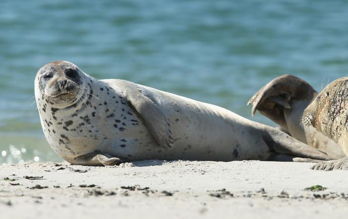 Остров Гельголанд в Германии. 4 августа 2013 года. Фото: Sean Gallup/Getty Images