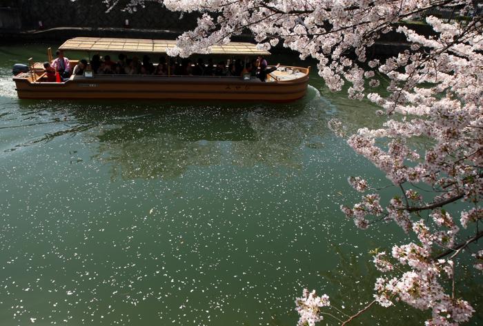 В Киото распустилась вишня. Фото: Buddhika Weerasinghe / Getty Images