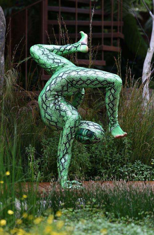 Королевское шоу цветов в Челси открылось. Фото: Tim P. Whitby/Getty Images for the 2013 Chelsea Flower Show Trailfinders Australian Garden
