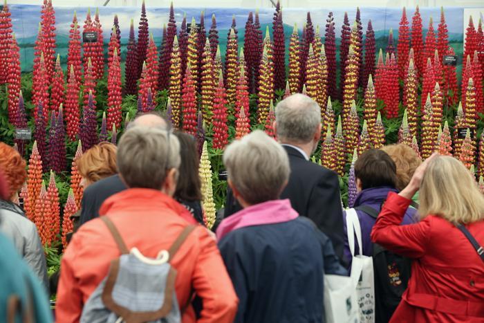 Выставка цветов в Челси открылась для публики. Фото: Oli Scarff/Getty Images