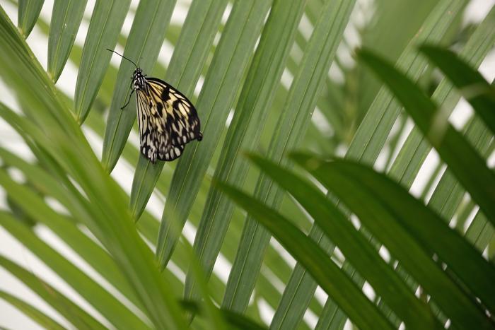 Выставка удивительных бабочек стартовала в Лондоне. Фото: Oli Scarff/Getty Images