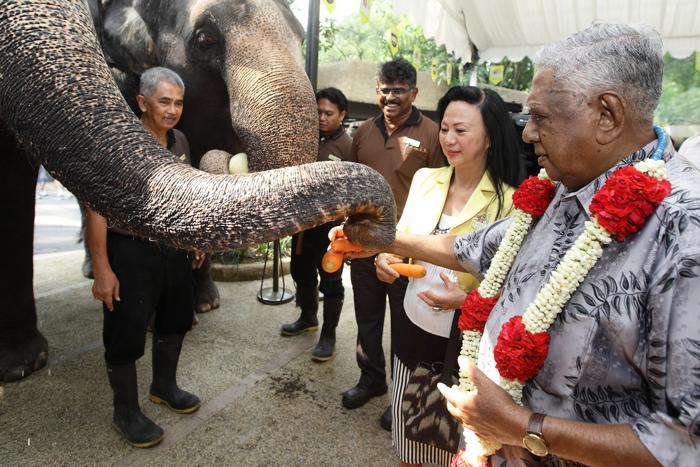 Бывший президент Сингапура кормит животных на 40-летнем юбилее сингапурского зоопарка. Фото: Suhaimi Abdullah/Getty Images