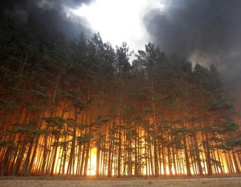 Пожары в России. Фото: ARTYOM KOROTAYEV/AFP/Getty Images
