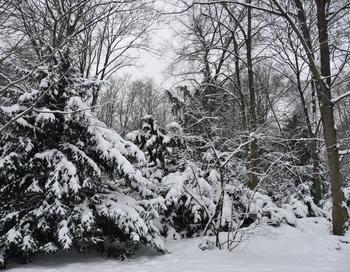 Приветствуя зиму. Фото: Николай Богатырев
