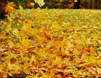Осенний фокстрот. Фото: Николай Богатырев