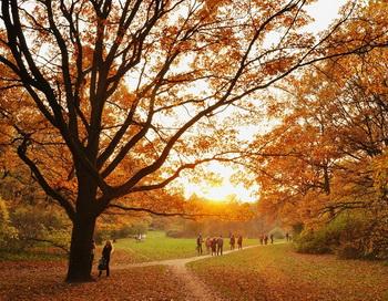 Осень. Фото: Николай Богатырев