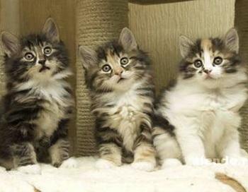 Сказки Джованны. Три котёнка. Фото с сайта prodam.slando.ru