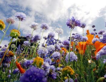 Полевые цветы. Фото: David McNew/Getty Images