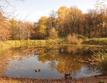 Заросший пруд. Фото: Николай Богатырев