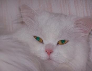 Кошка. Фото: Екатерина Кравцова/Великая Эпоха (The Epoch Times)