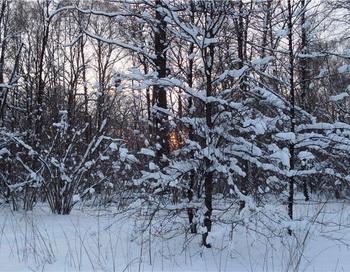 Зимняя. Притча. Фото: Николай Богатырев