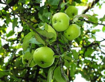 В полдень они остановились под яблоней передохнуть. Фото: Николай Богатырёв