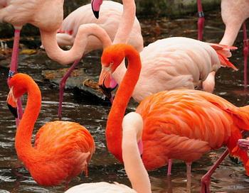 Фламинго. Фото: Екатерина Кравцова/Великая Эпоха (The Epoch Times)