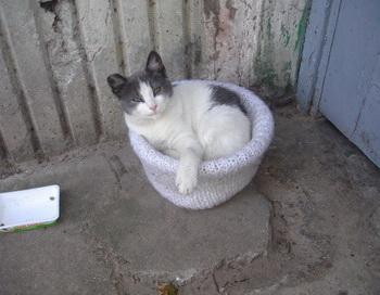 Кошки в нашей жизни. Фото: Великая Эпоха