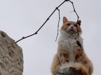 Есть ли у животных судьба? Фото: Хава Тор/Великая Эпоха (The Epoch Times)