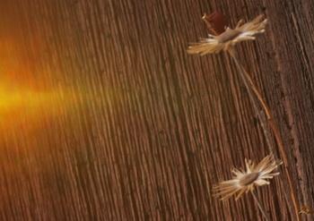 Стрижка горячими ножницами в салоне красоты. Фото:Хава ТОР/Великая Эпоха