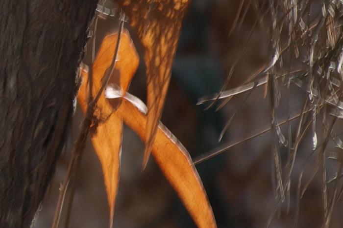 и ломкий лист – скелет воздушной рыбки, который ветер, как волной, совлек...Фото: Хава Тор/Великая Эпоха (The Epoch Times)