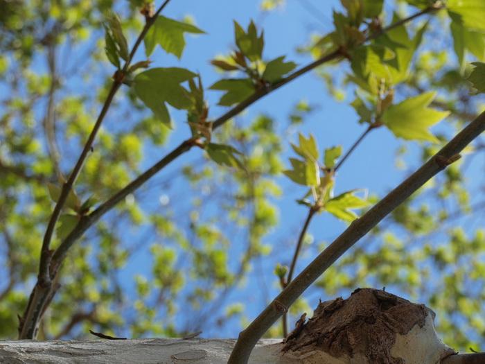РастенЯ получил язык при сотворенье мира и не могу войти в мелодию древес, в пустоты дупел их, в двойных стволов длинноты..., Фото: Хава Тор/Великая Эпоха (The Epoch Times)
