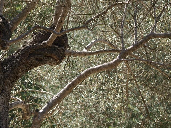 «Если выйдешь из леса…». Фото-стихо-творение. Фото: Хава Тор/Великая Эпоха (The Epoch Times)