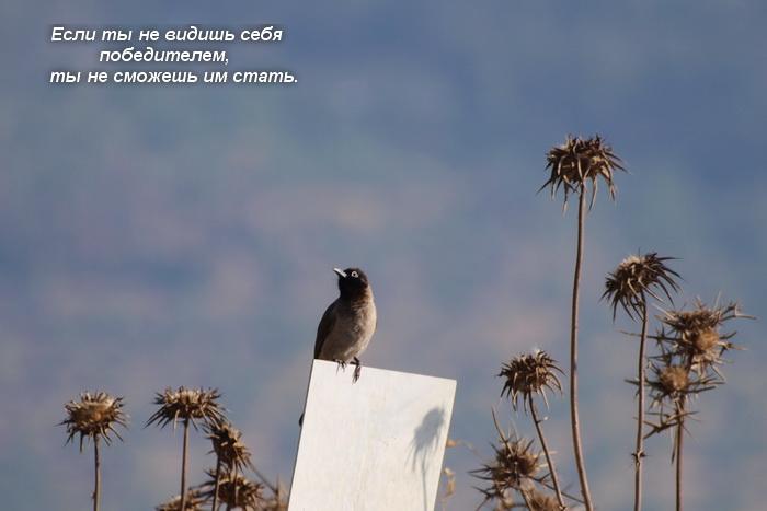 Афоризмы об успехе от Зига Зиглара. Фото: Хава Тор/Великая Эпоха (The Epoch Times)