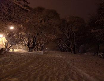 Зима... Вечером пойдём искать на снегу следы...! Фото: Васильева Марина/photodom.com