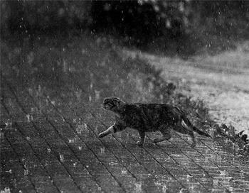 Кошка под дождём... Фото: diary.ru