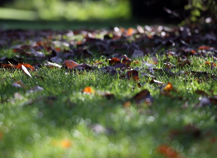Деревья одеваются в осенний наряд в Великобритании в октябре 2013 года. В этом году осень станет особенно яркой. Фото: Matt Cardy/Getty Images