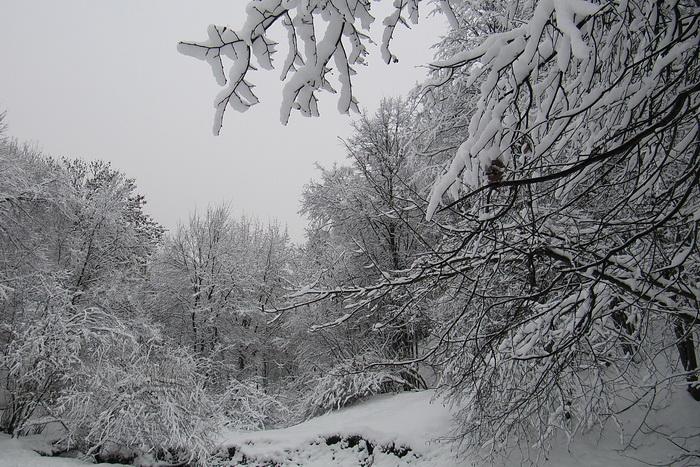 Стихи о зиме и Новом годе. Фото: Николай Богатырёв