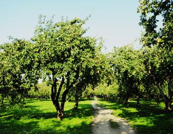 Старый сад. Фото: Николай Богатырёв