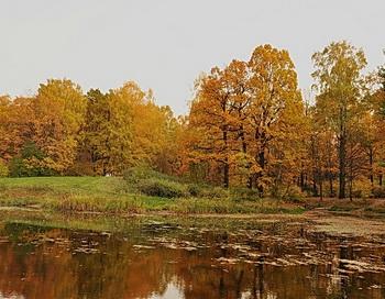 Осень. Фото: Николай Богатырёв