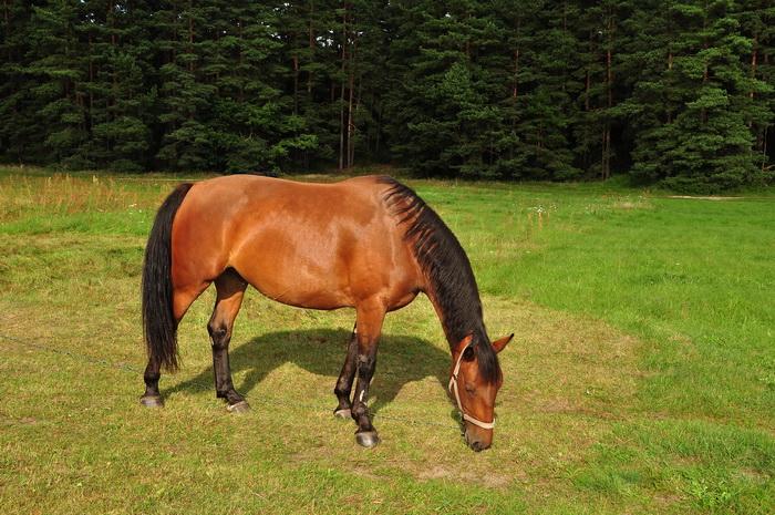 О лошадях. Фото. Николай Богатырёв